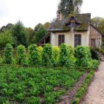 {:ru}Покупка дома с виноградником во Франции{:}{:ua}Купівля будинку з виноградником у Франції{:}