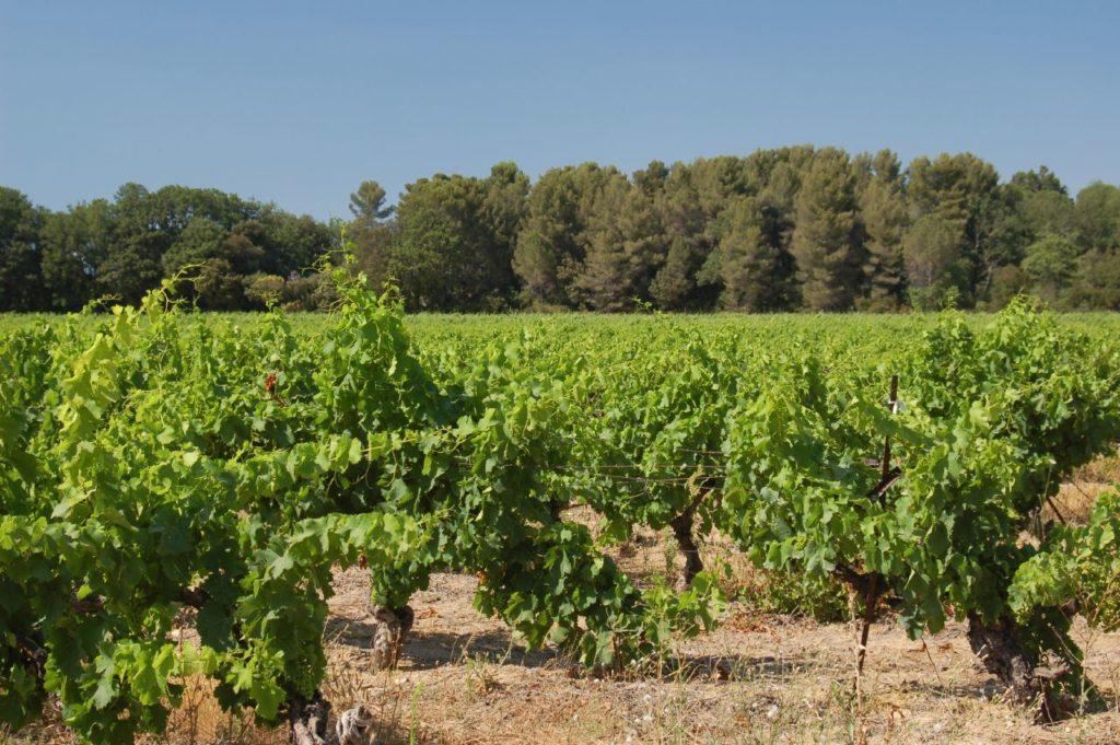 Покупка дома с виноградником во Франции