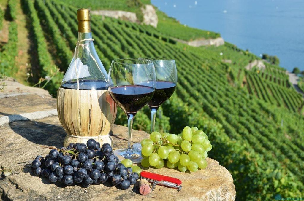 купить виноградник во Франции